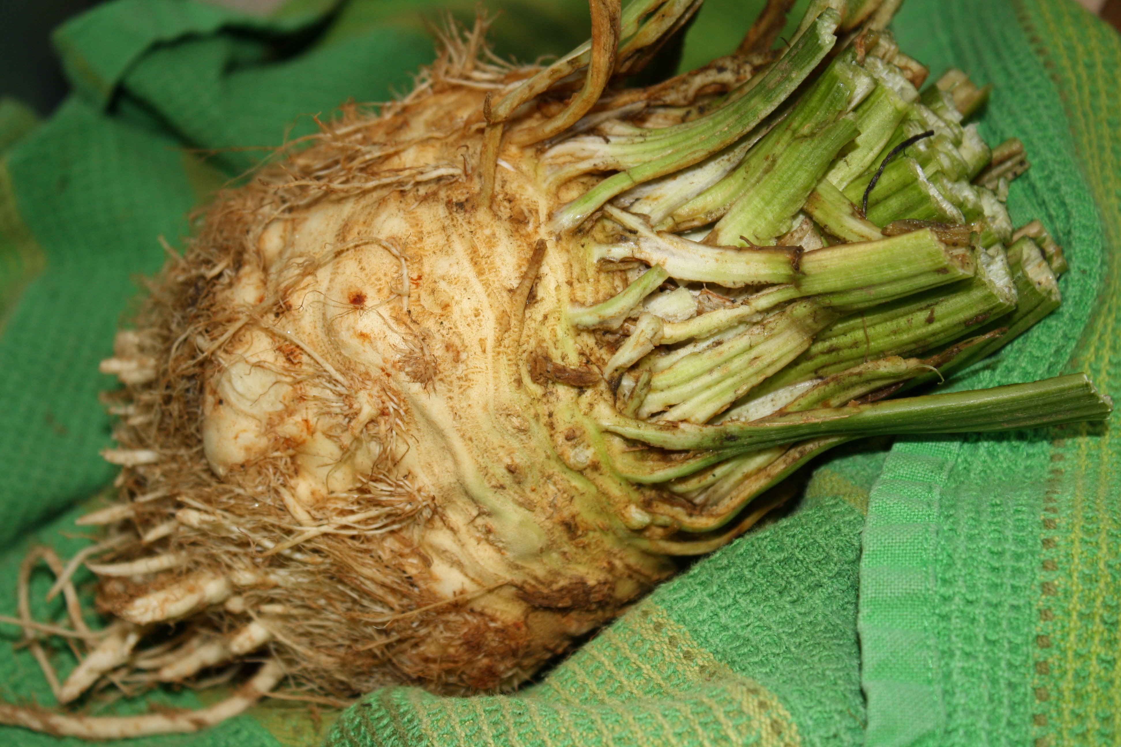 Veggie of the Day: Celery Root | Dana White Nutrition